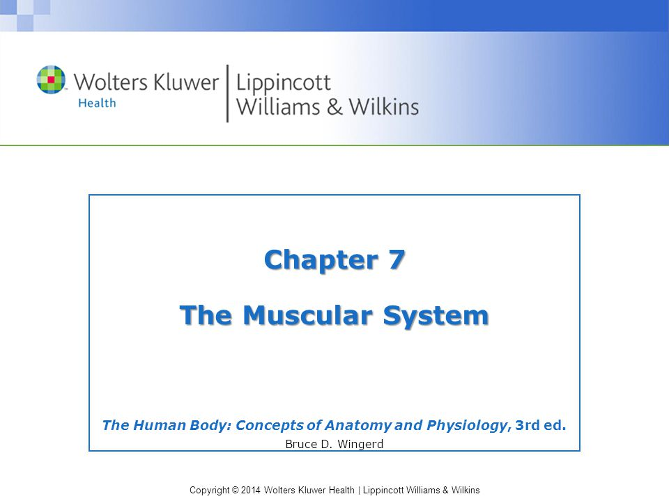The Human Body: Concepts of Anatomy and Physiology, 3rd ed. - ppt ...