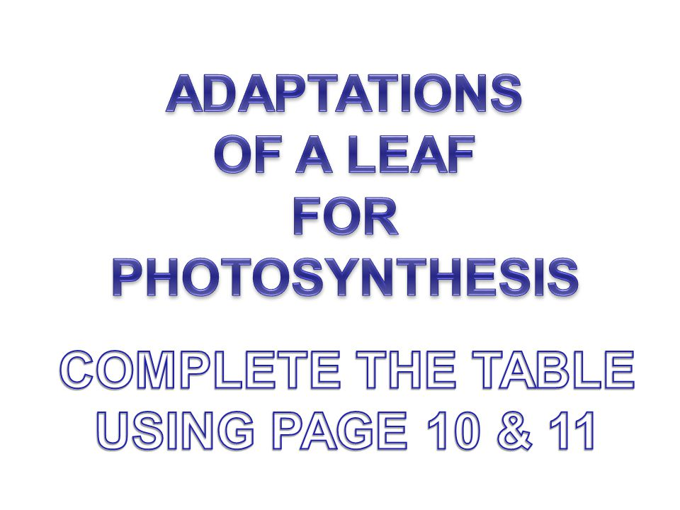 ADAPTATIONS OF A LEAF FOR PHOTOSYNTHESIS COMPLETE THE TABLE USING PAGE 10 & 11