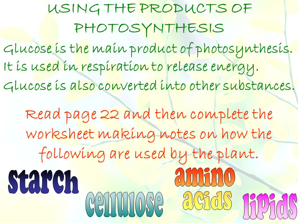 USING THE PRODUCTS OF PHOTOSYNTHESIS