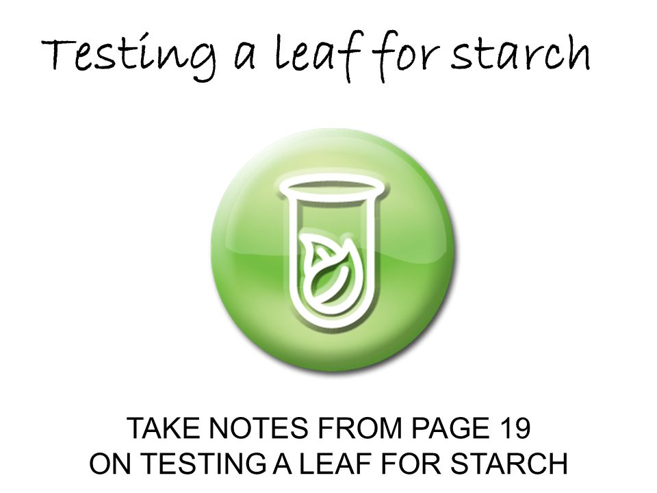 ON TESTING A LEAF FOR STARCH
