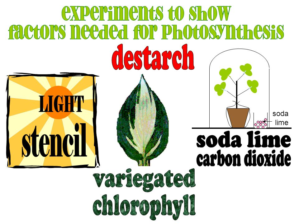 factors needed for photosynthesis