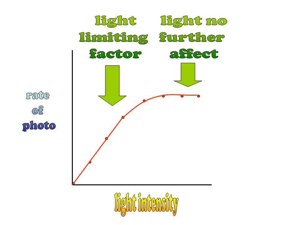 light limiting factor light no further affect rate of photo light intensity