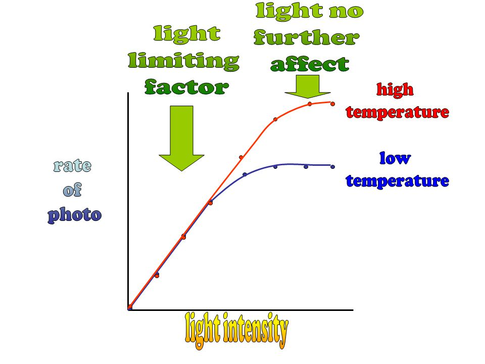 light no further. affect. light. limiting. factor. high. temperature. low. temperature. rate.