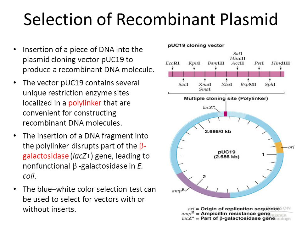 Recombinant DNA Technology Cloning ppt video online download – Recombinant Dna Worksheet