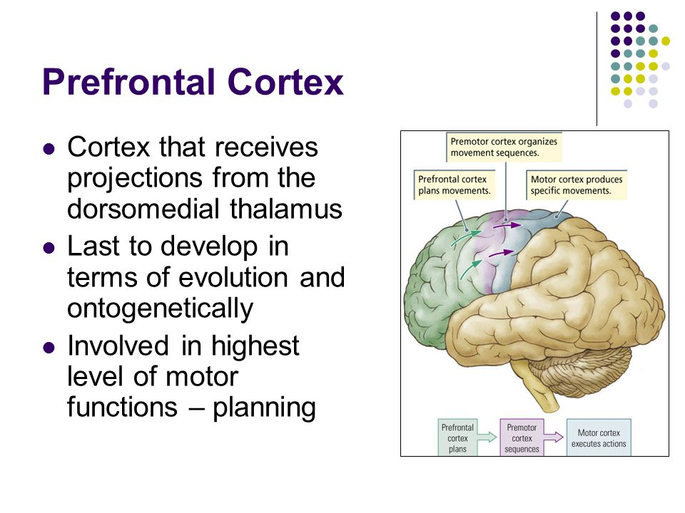 The motor system and its disorders ppt download for Motor planning disorder symptoms