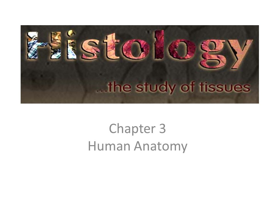Chapter 3 Human Anatomy. - ppt video online download