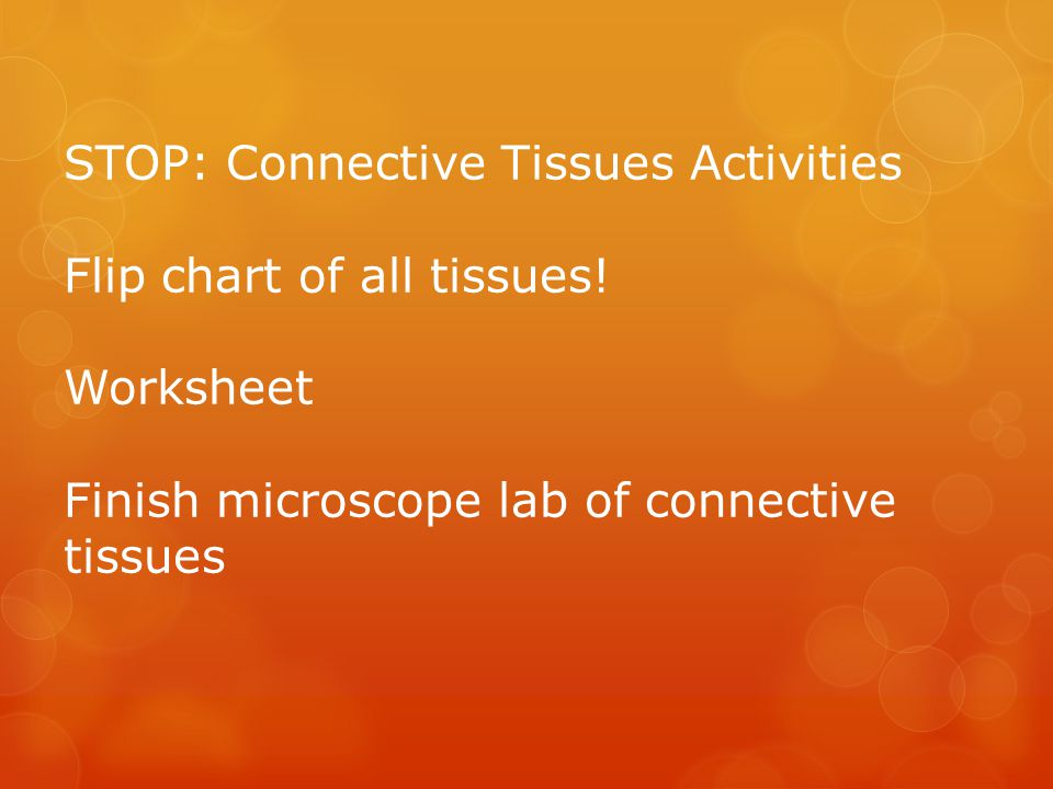 EpithelialConnectiveMuscle and Nervous Tissues ppt download – Connective Tissue Worksheet