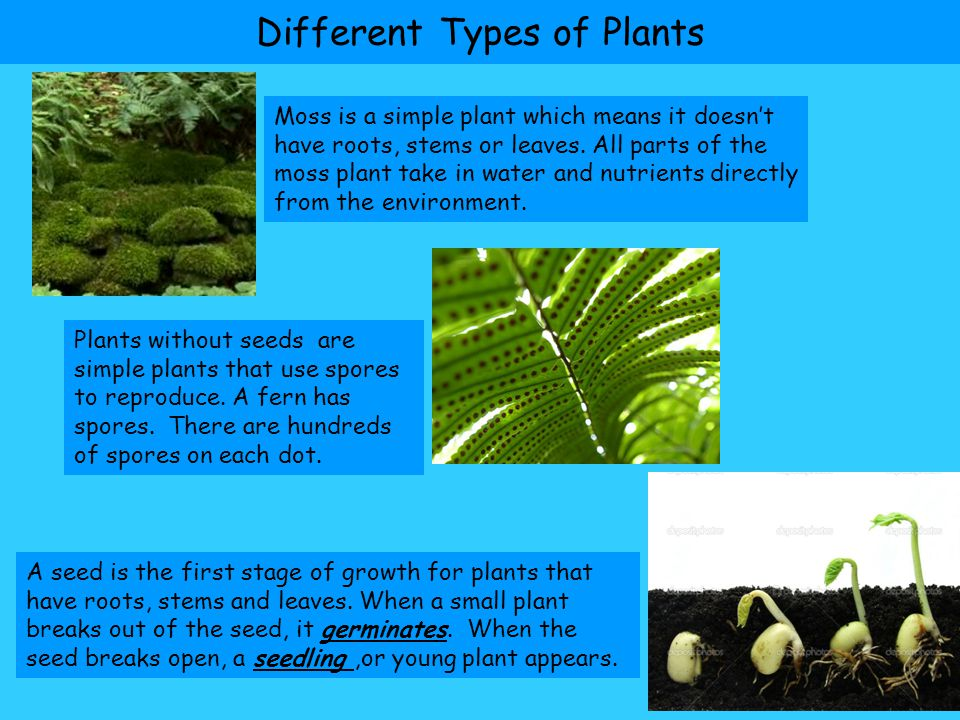Unit a chapter 1 types of plants vocabulary ppt video for Different kinds of plants