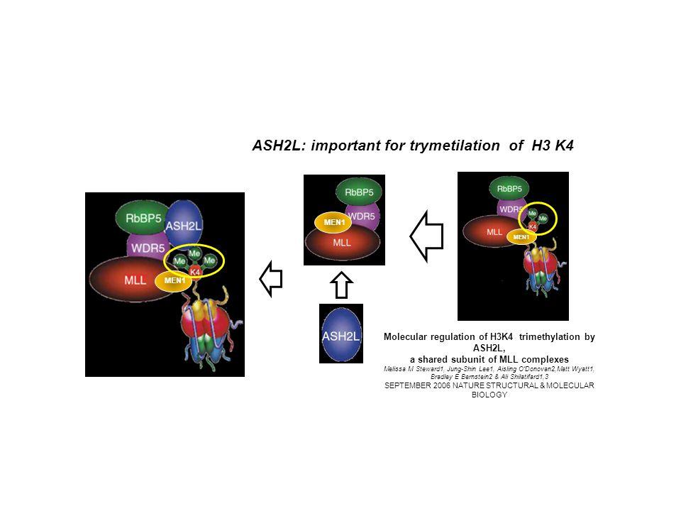 ASH2L: important for trymetilation of H3 K4