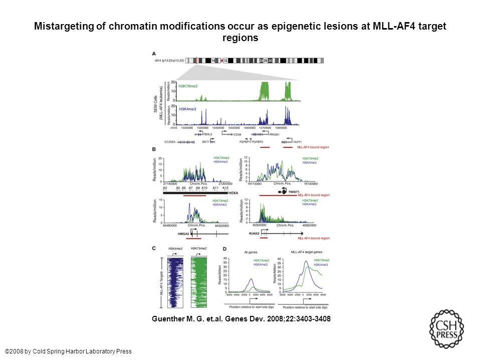 Mistargeting of chromatin modifications occur as epigenetic lesions at MLL-AF4 target regions