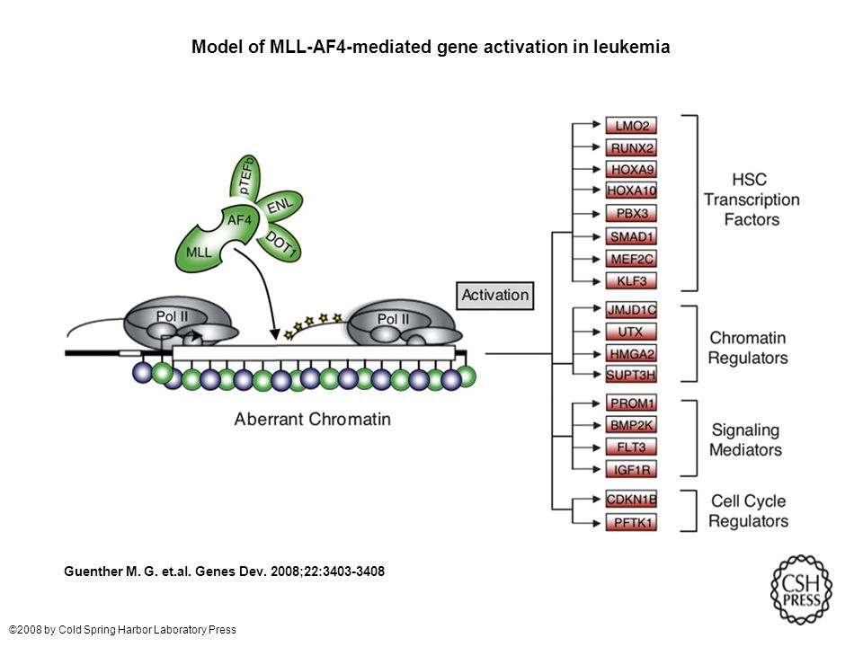 Model of MLL-AF4-mediated gene activation in leukemia