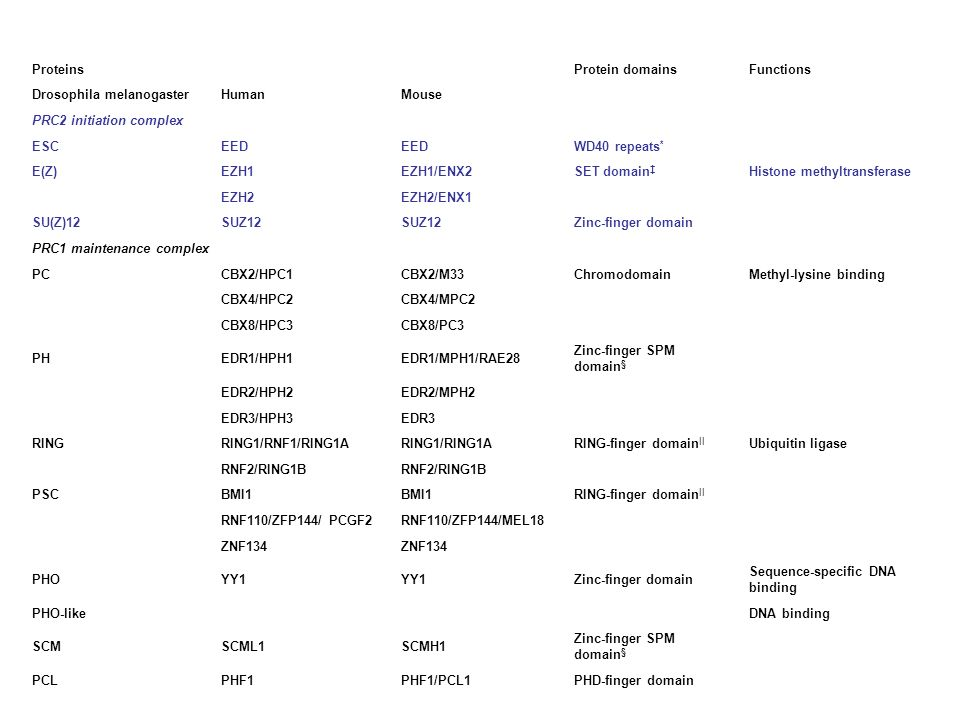 ProteinsProtein domains. Functions. Drosophila melanogaster. Human. Mouse. PRC2 initiation complex.