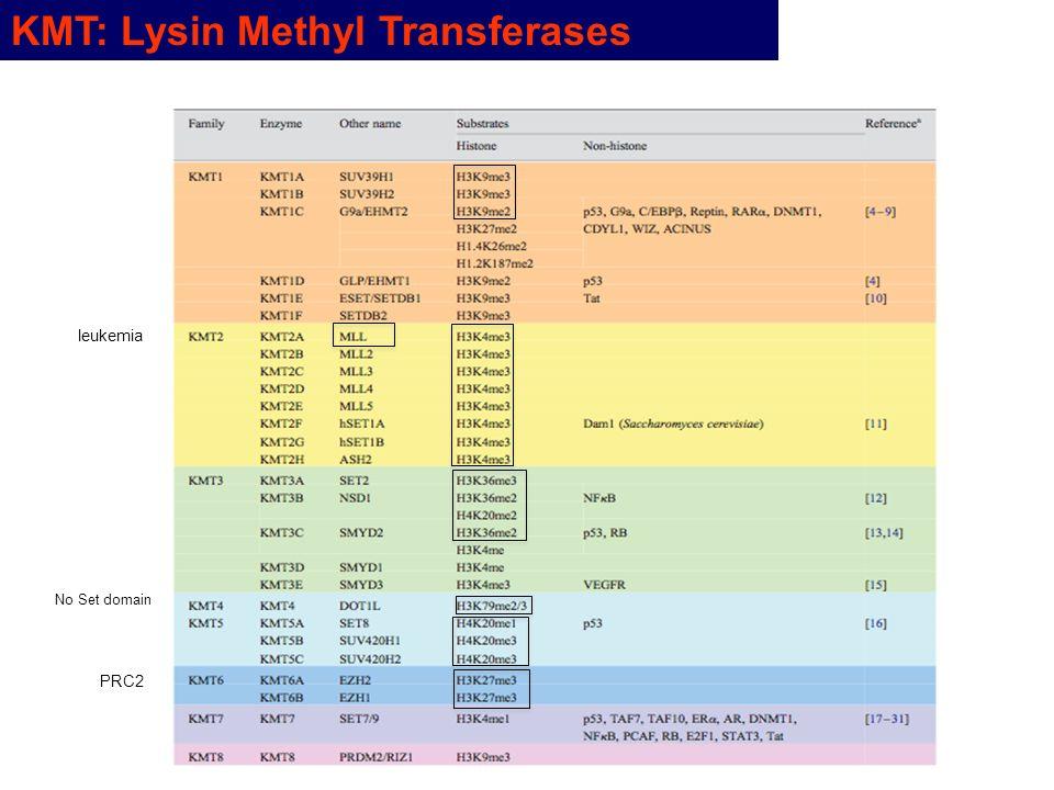 KMT: Lysin Methyl Transferases