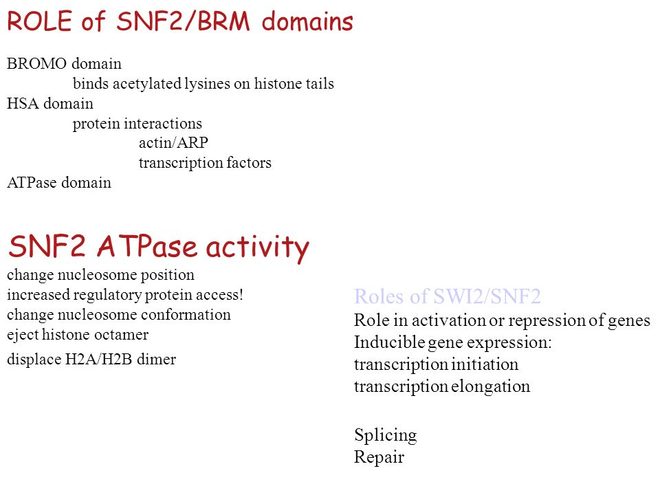 SNF2 ATPase activity ROLE of SNF2/BRM domains Roles of SWI2/SNF2