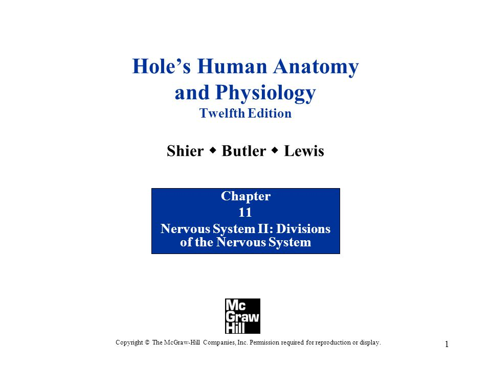 Chapter 11 Nervous System II: Divisions of the Nervous System - ppt ...