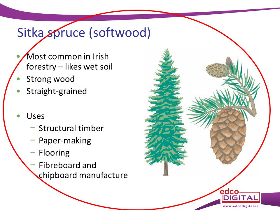 Chapter 8 Types of Tree. - ppt video online download