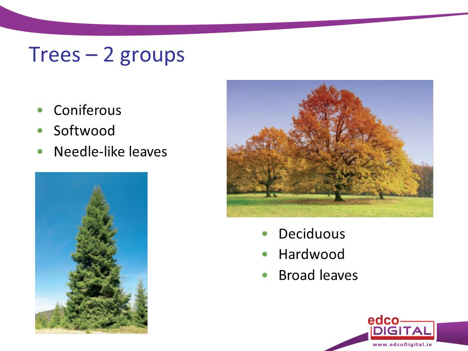 Chapter types of tree ppt video online download