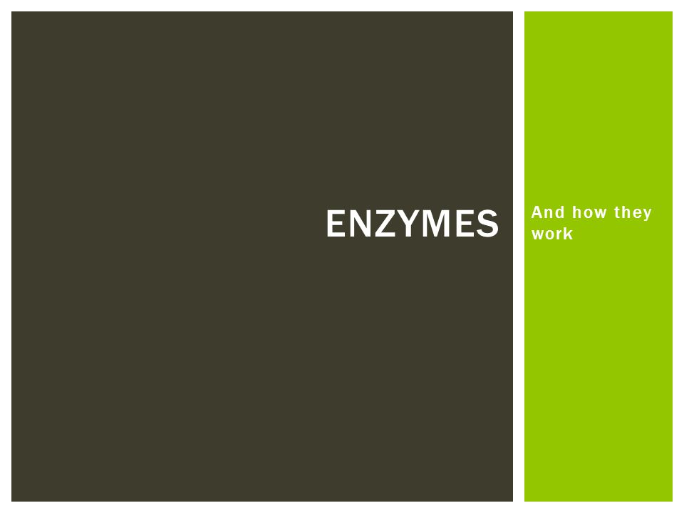 Enzymes And how they work