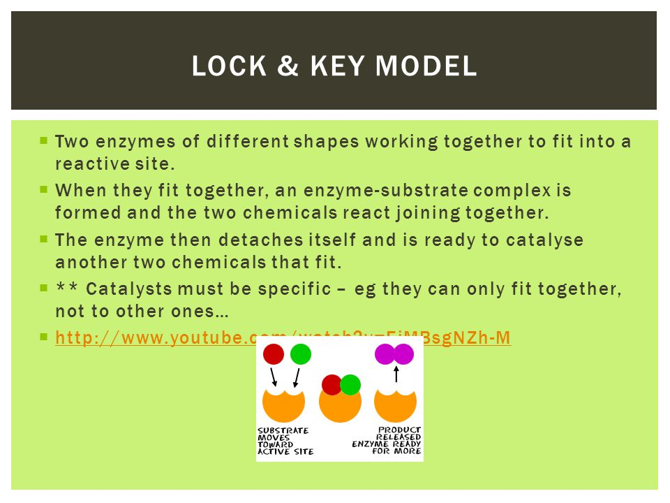 Lock & Key model Two enzymes of different shapes working together to fit into a reactive site.