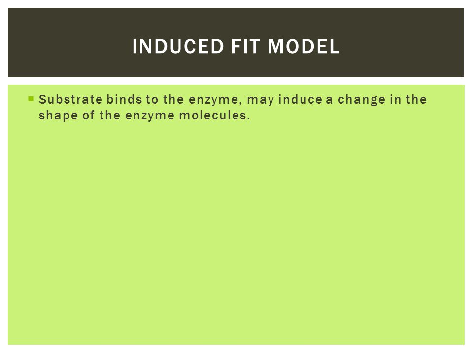 Induced fit model Substrate binds to the enzyme, may induce a change in the shape of the enzyme molecules.