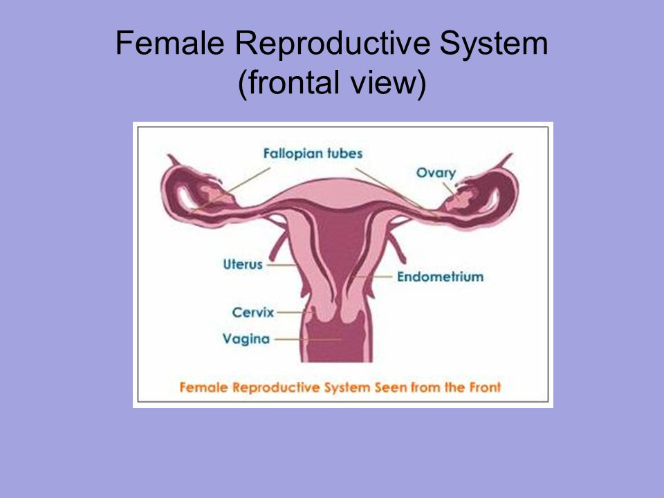 a comparison of different reproductive systems Reproductive system, part 2 - male reproductive system: crash course a&p 41 welcome to the reproductive system | reproductive system physiology most mammal reproductive systems are similar, however, there are some notable differences between the non-human mammals and humans.