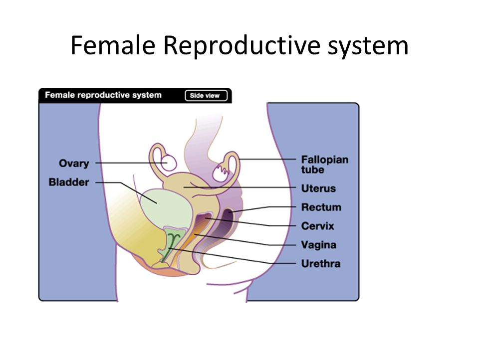 reproduction system notes