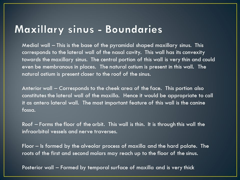 Last Bing Queries & Pictures for Maxillary Sinus Boundaries