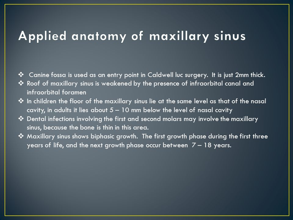 Anatomy of para nasal sinuses ppt download for Floor of the maxillary sinus