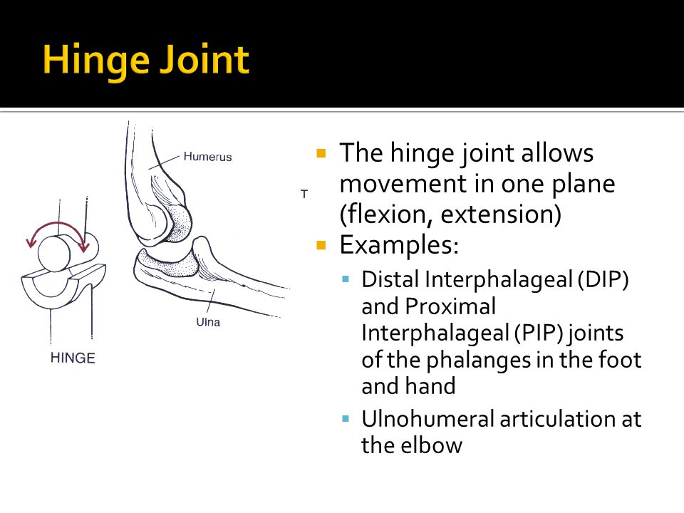 Movements And Joints Kinesiology Terms Ppt Video Online Download
