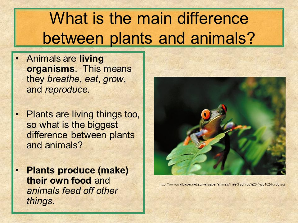 the differences between plants and animals The fundamental difference is in the way animals and plants take in carbon to form organic compounds plants are autotrophs, which means that.