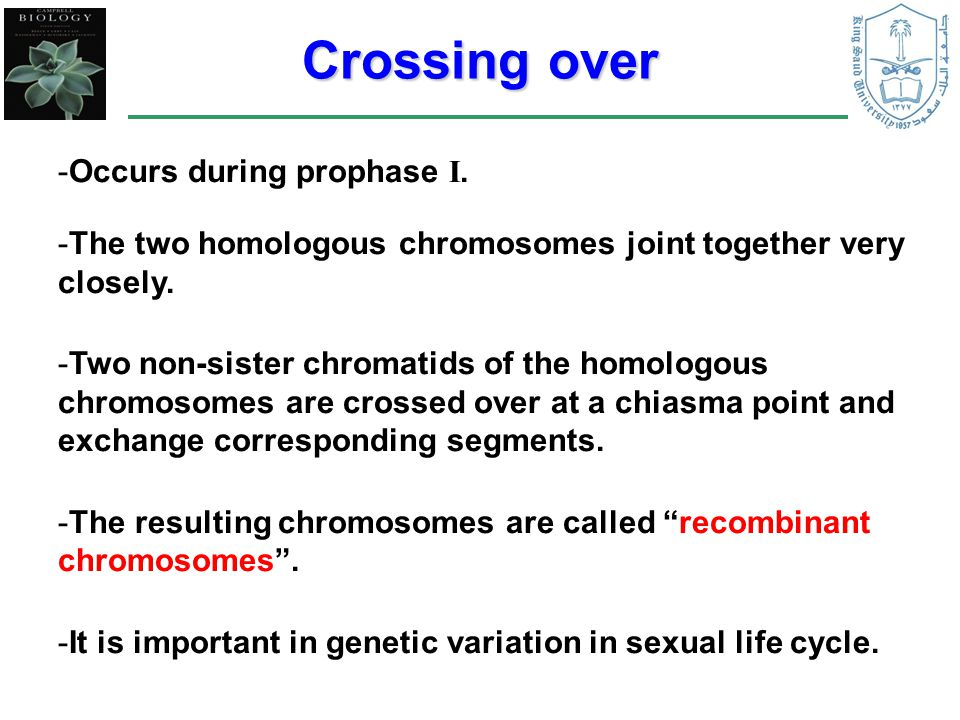 Crossing over Occurs during prophase I.