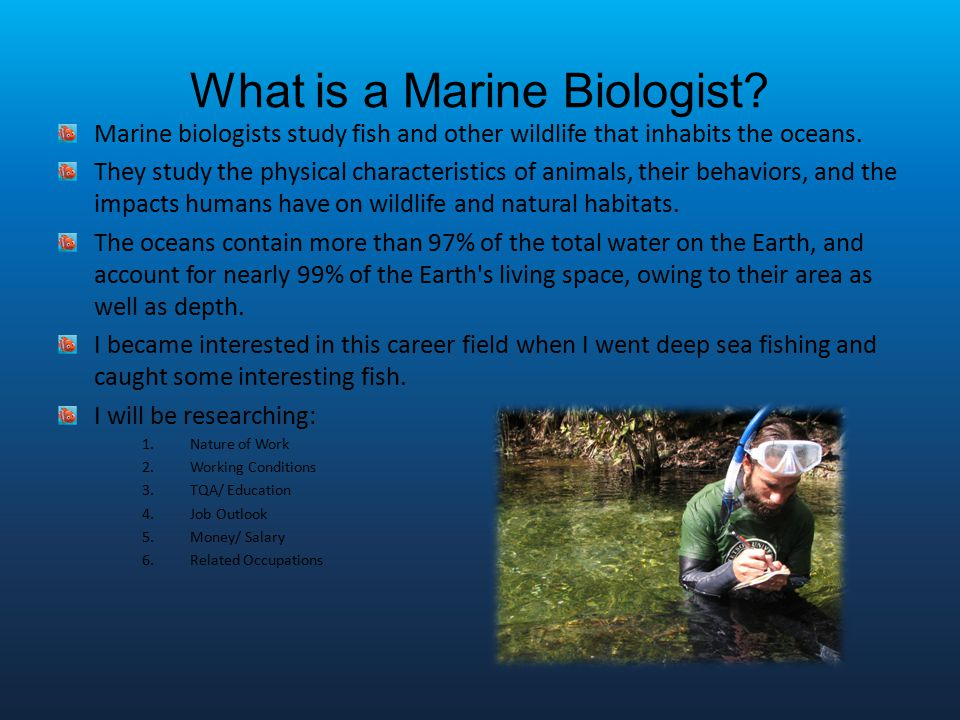Marine Biology  St Hour Career Technology  Ppt Download