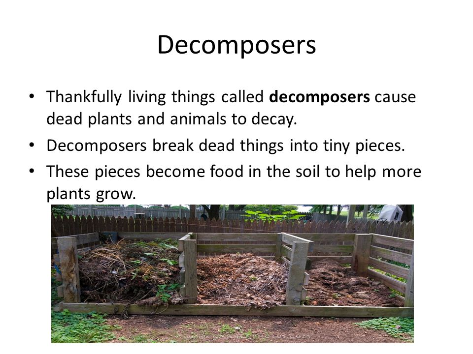 Producers consumers and decomposers ppt video online for Things in soil