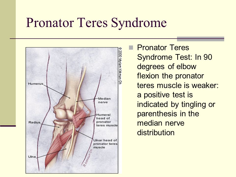 The Elbow and Forearm. - ppt video - 86.3KB