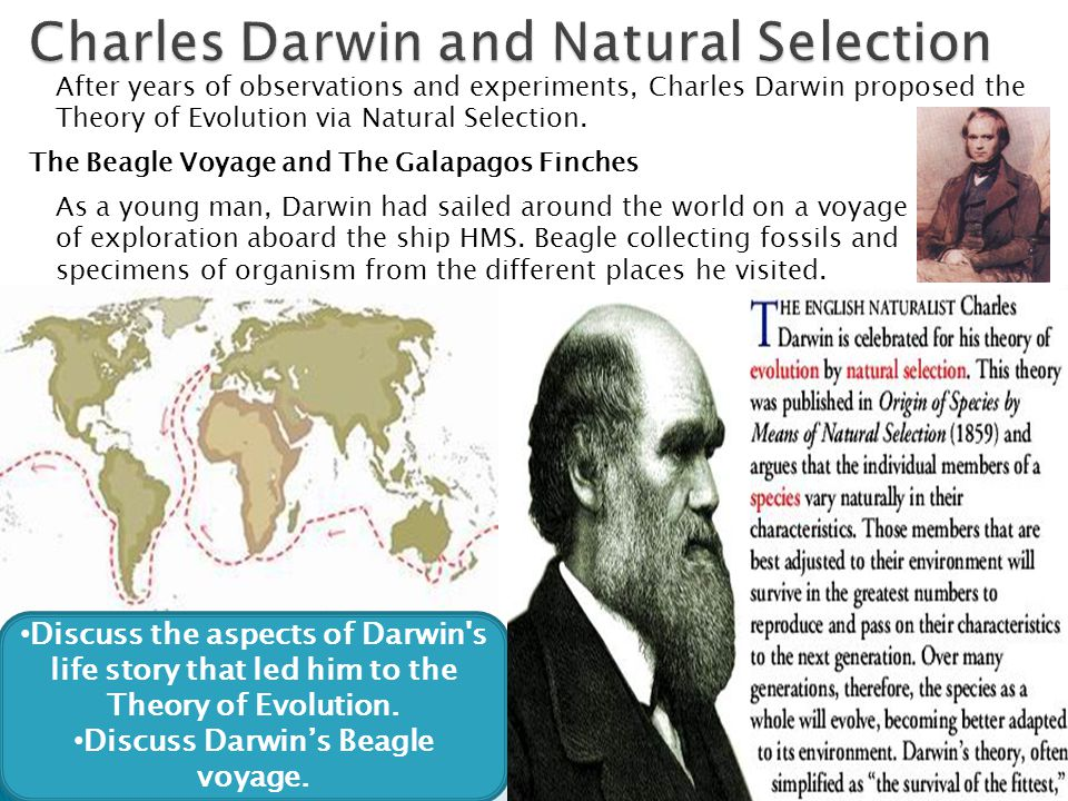 Natural Selection Explained By Darwin