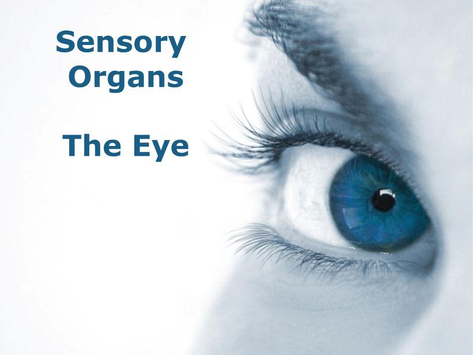 Sensory Organs The Eye Free Powerpoint Templates