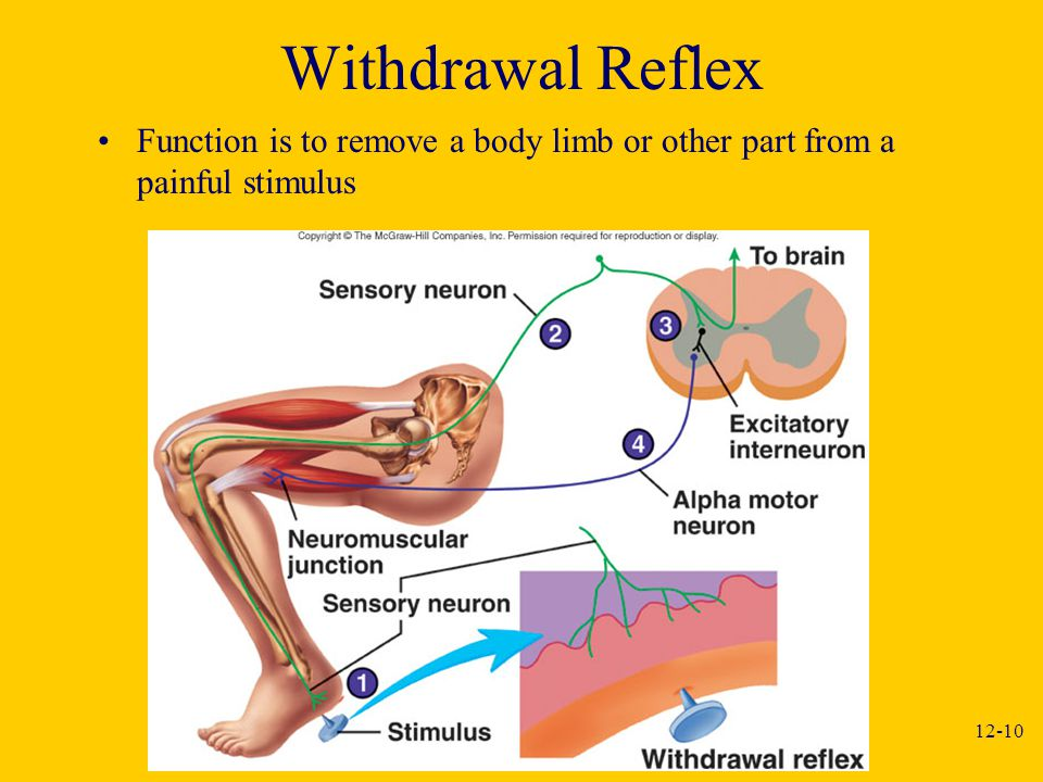 Withdrawal Reflex Function is to remove a body limb or other part from a painful stimulus