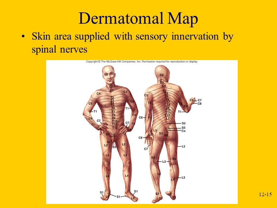 Dermatomal Map Skin area supplied with sensory innervation by spinal nerves
