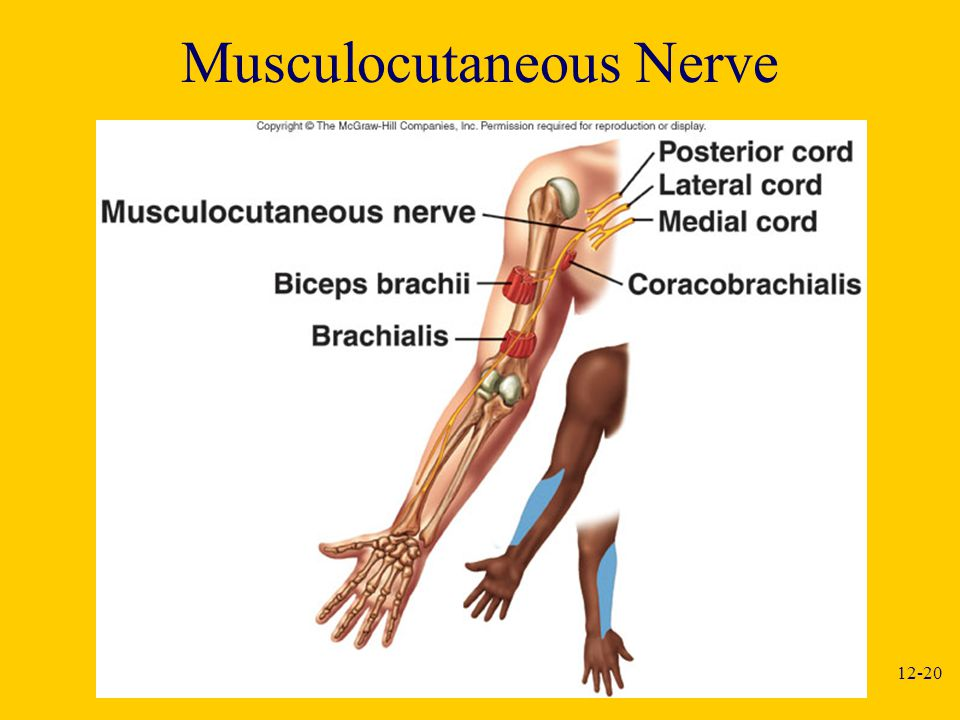 Musculocutaneous Nerve