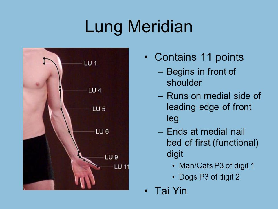 lung meridian sedating points Master tung acupuncture points for sciatic pain give me amazing the primary points used for sciatic regardless of the meridian(s) the lung in chinese.