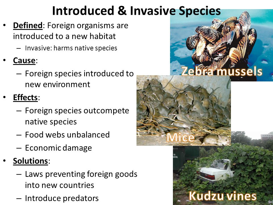 List of invasive species in the Everglades