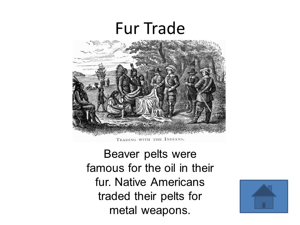 Fur Trade Beaver pelts were famous for the oil in their fur.