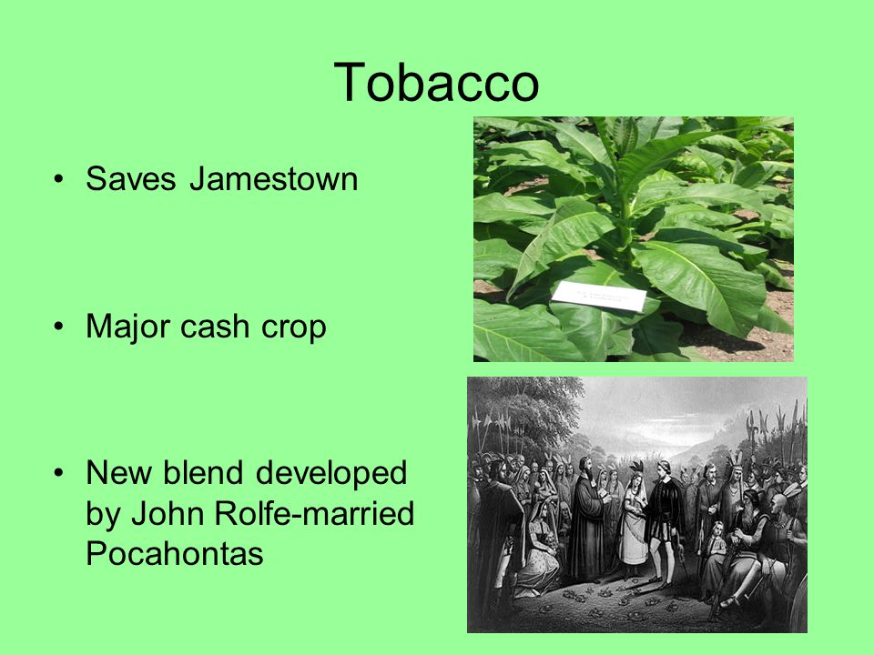 Tobacco Saves Jamestown Major cash crop