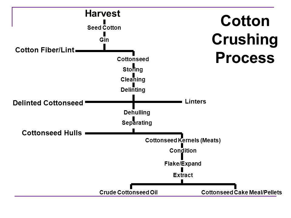 Cottonseed Oil Cake Composition