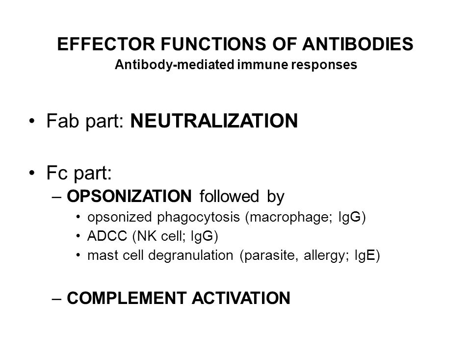 EFFECTOR FUNCTIONS OF ANTIBODIES