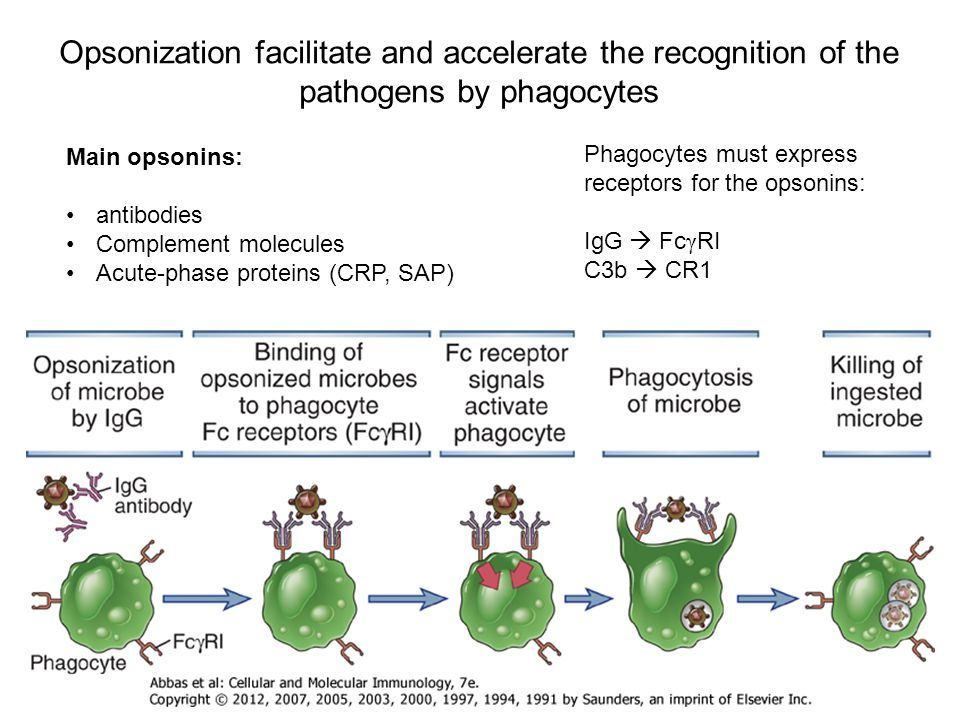 Opsonization facilitate and accelerate the recognition of the pathogens by phagocytes