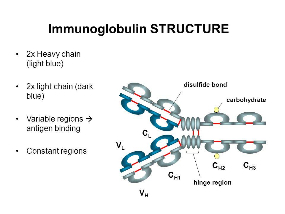 Immunoglobulin STRUCTURE