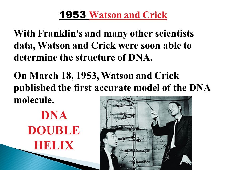 dna watson and crick In recognition of their discovery watson and crick received the nobel prize in physiology or medicine in 1962 together with maurice wilkins, the crystallographer who had taken the first high-resolution x-ray images of dna fibers and who had thus laid the groundwork for their discovery.