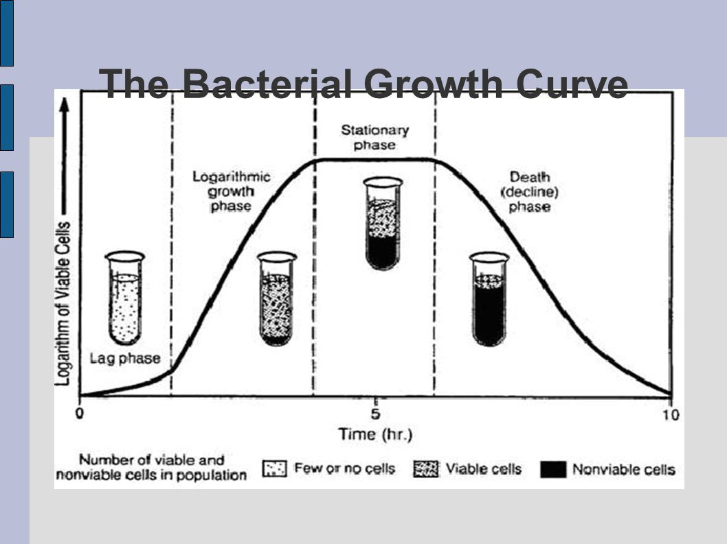 Measurement of Bacterial Growth - ppt download