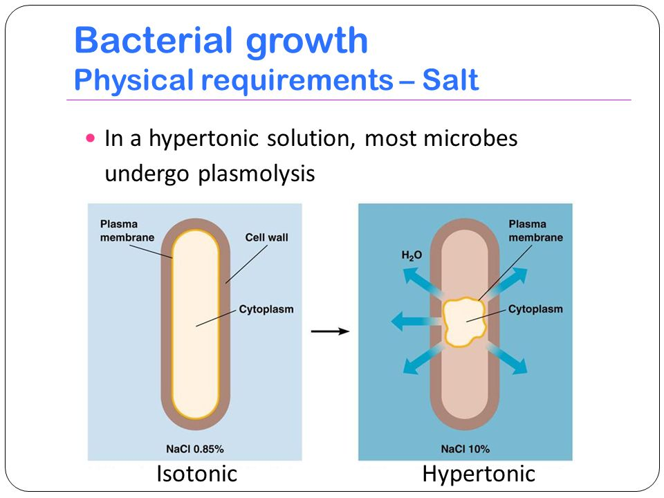 Bacterial growth Physical requirements – Salt
